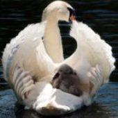 In momenti di grande cambiamento e decisioni da prendere: pensa come se fossi una madre.