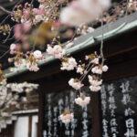 Ikigai: la via per la felicità